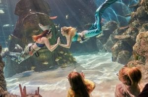 Sea Life mermaids